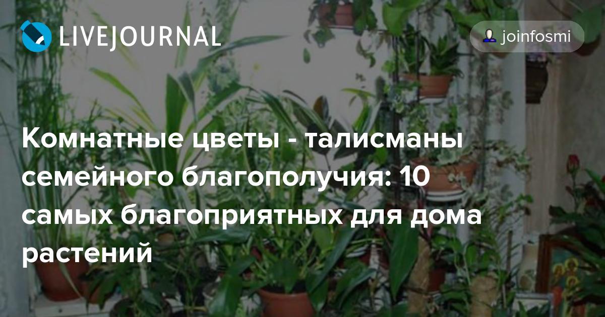 Комнатные цветы и цветущие растения с названиями - pocvetam.ru