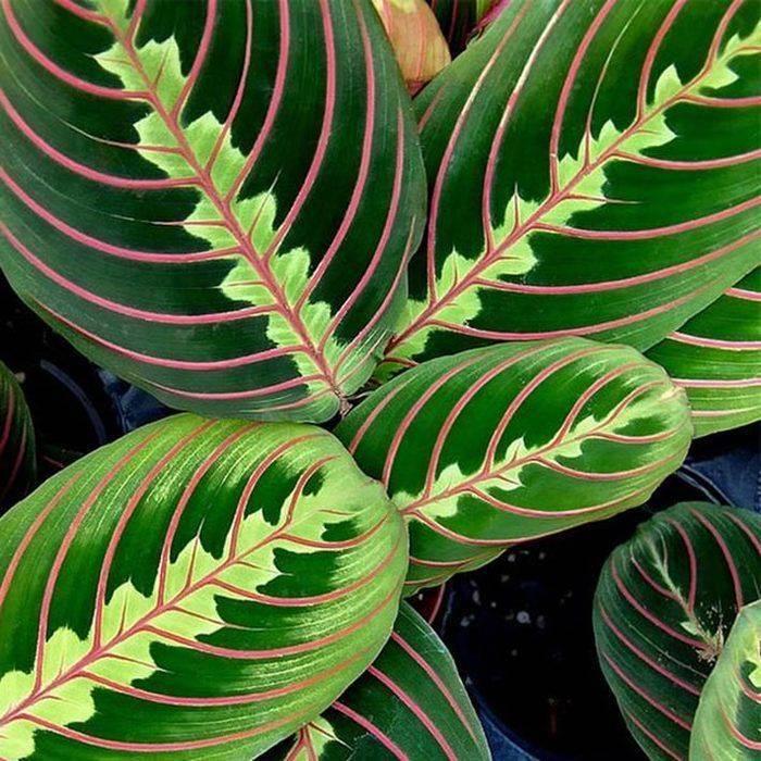 Подальше от окна — теневыносливые растения