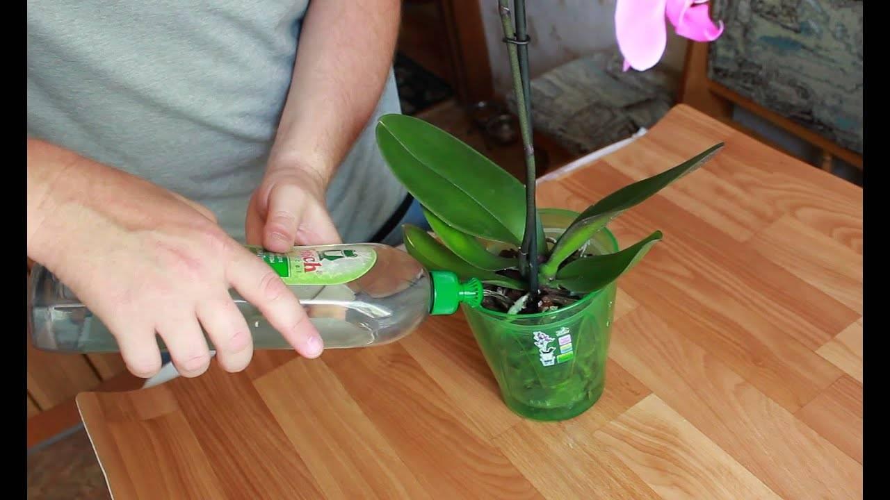 Как поливать орхидею. 7 ошибок при поливе