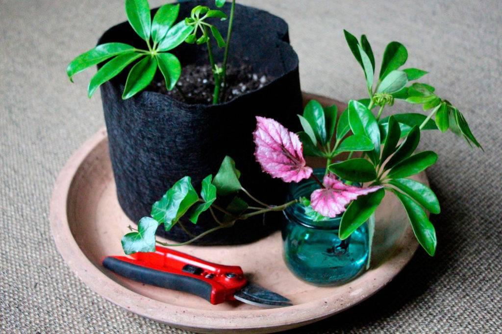 Уход в домашних условиях за комнатным цветком — филодендрон