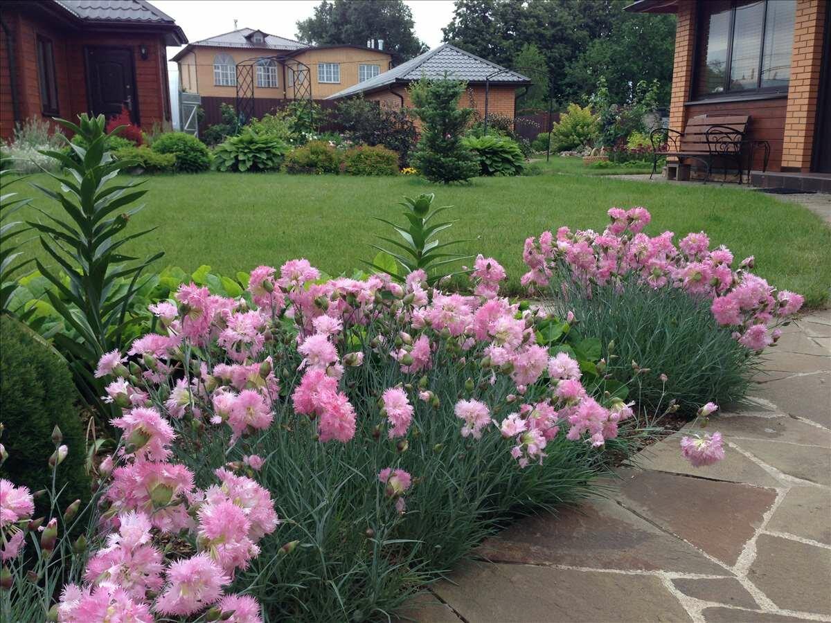 Садовый мак: фото, как посадить, как выращивать мак из семян в саду