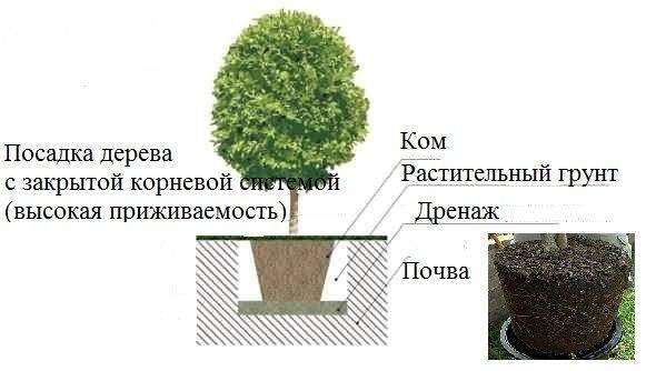 Что посадить в тени на даче