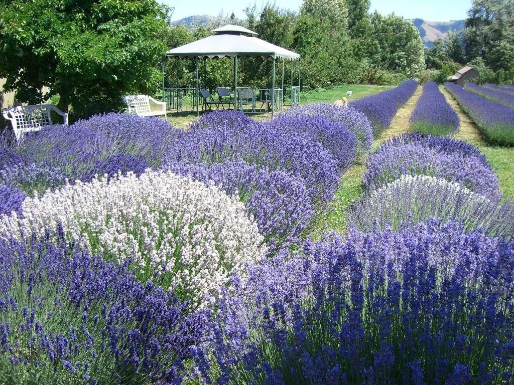 Лучшие цветы и другие растения с сильным ароматом