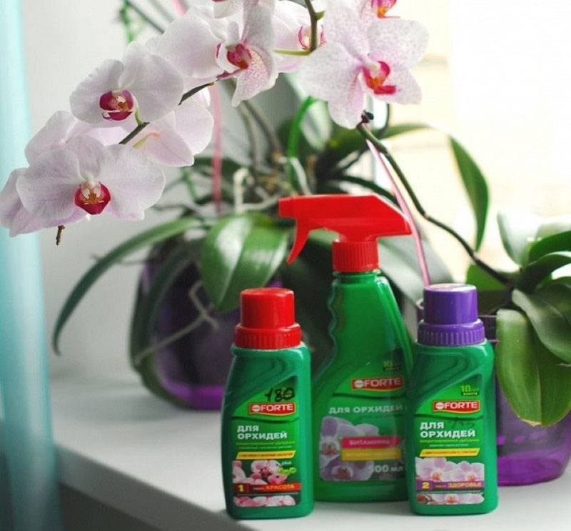 Чесночная вода для орхидей — полезные свойства