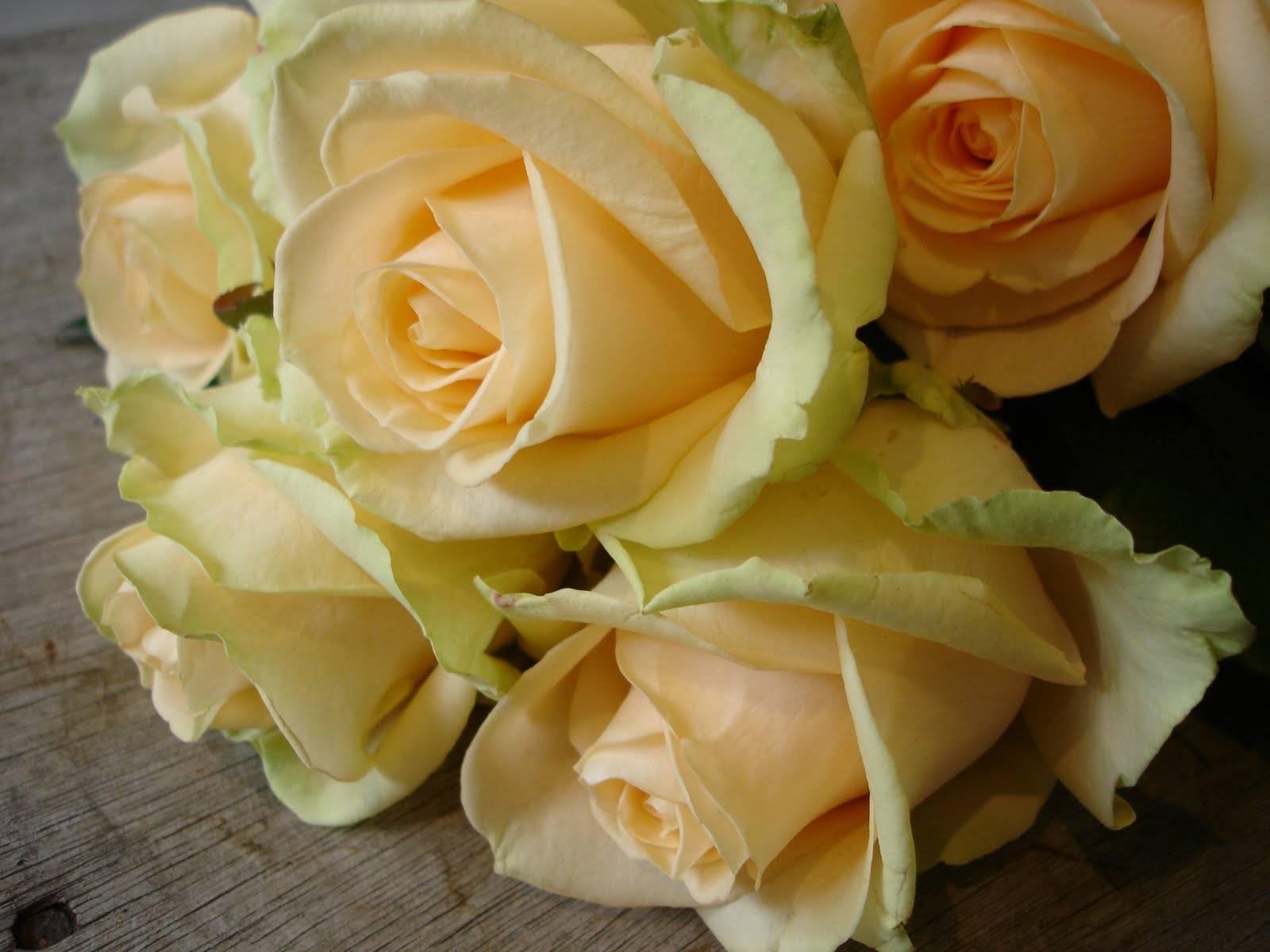 Какие розы лучше: чайно-гибридные или флорибунда