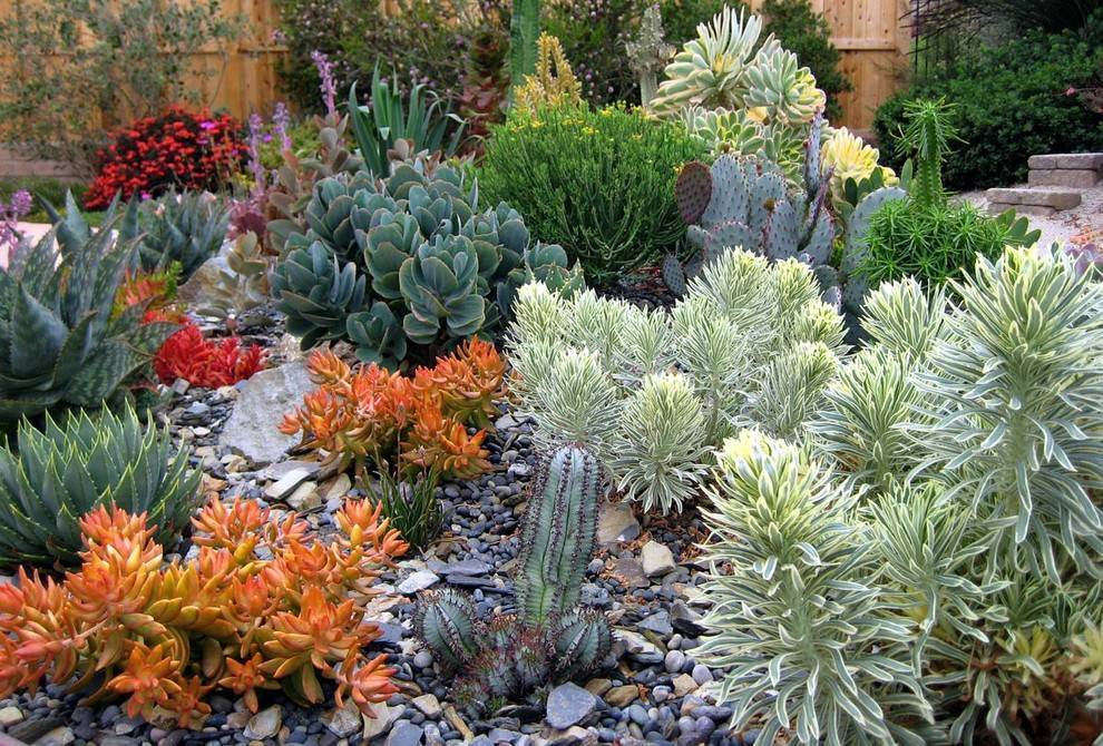 Аптения — уход и размножение цветка