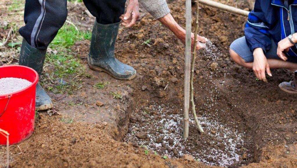 Чем подкармливать сад весной: удобрения для кустарников и деревьев