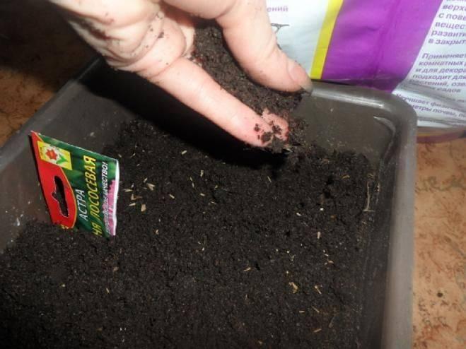 Цветок лаватера: посадка и уход, фото, выращивание из семян в открытом грунте