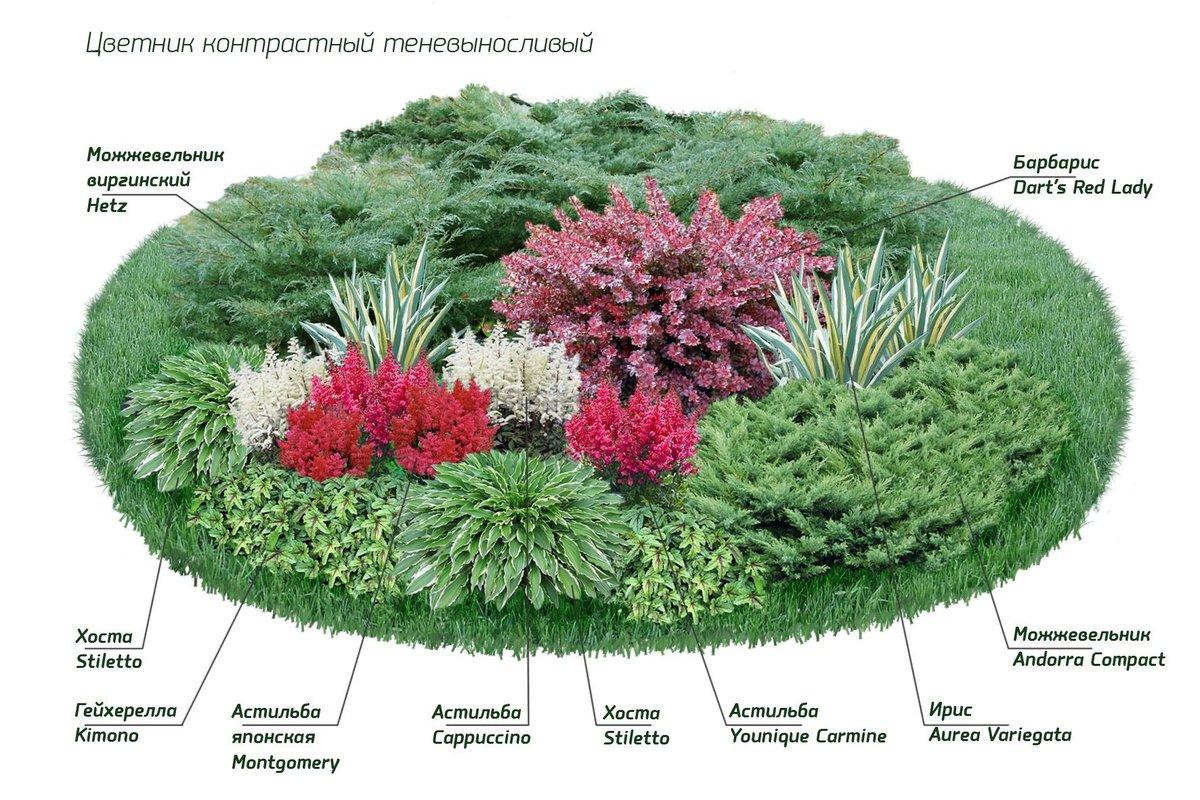 Обязательно посадите: 6 необычных хвойных растений, которые зимуют в средней полосе
