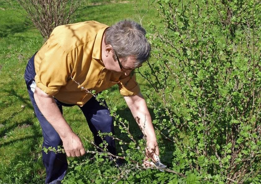 Жасмин — цветок для сада, посадка и уход за кустарником