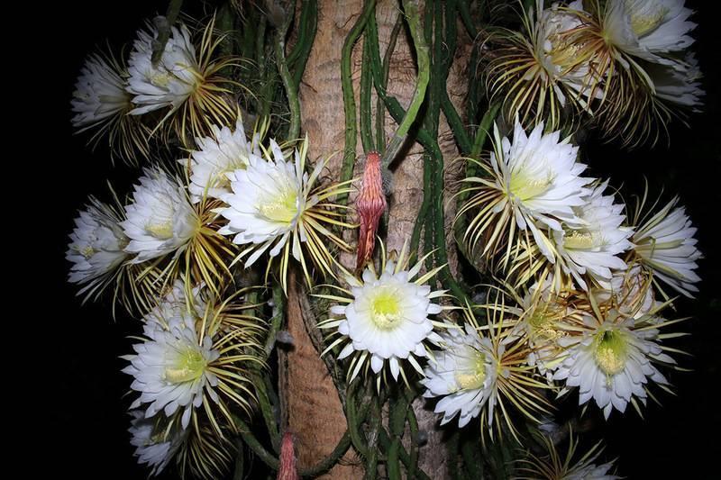 Как часто поливать кактус: количество раз и варианты в домашних условиях