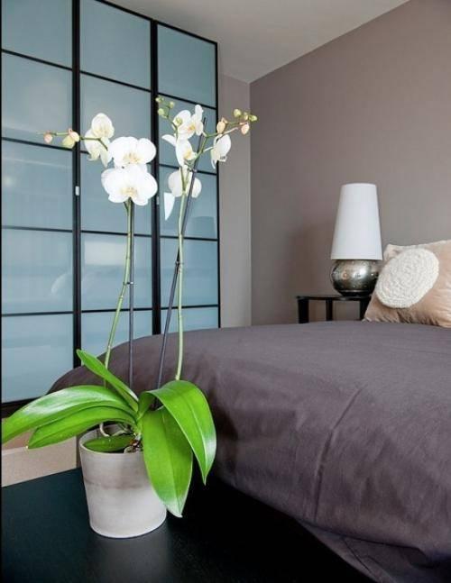 Можно ли дома выращивать комнатные папоротники? почему нельзя сажать