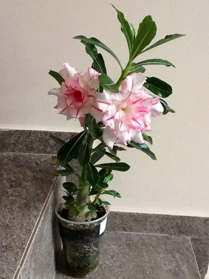 Почему комнатные растения не цветут и как это исправить