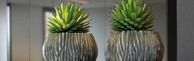 Выращивание кактусов в открытом грунте