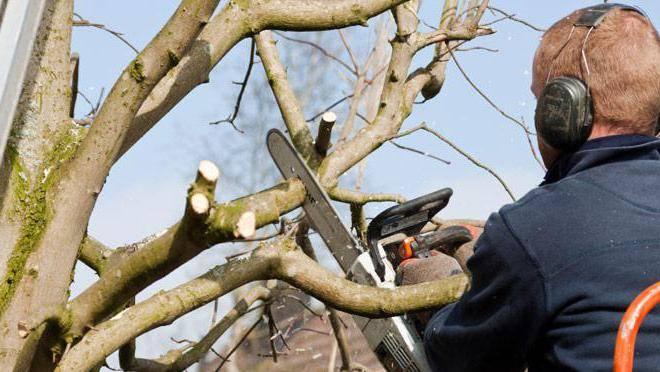 Чем обработать срезы яблонь после обрезки. когда обрабатывать срезы и повреждениякоры яблони?