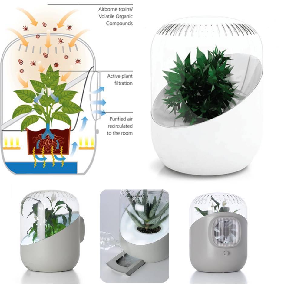 8 лучших комнатных растений-фильтров