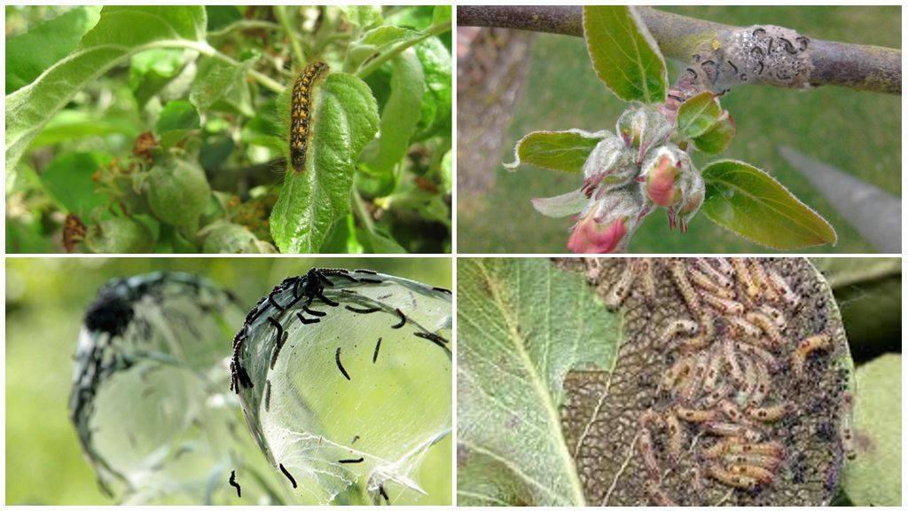 Почему желтеют листья у замиокулькаса (долларового дерева) и что делать