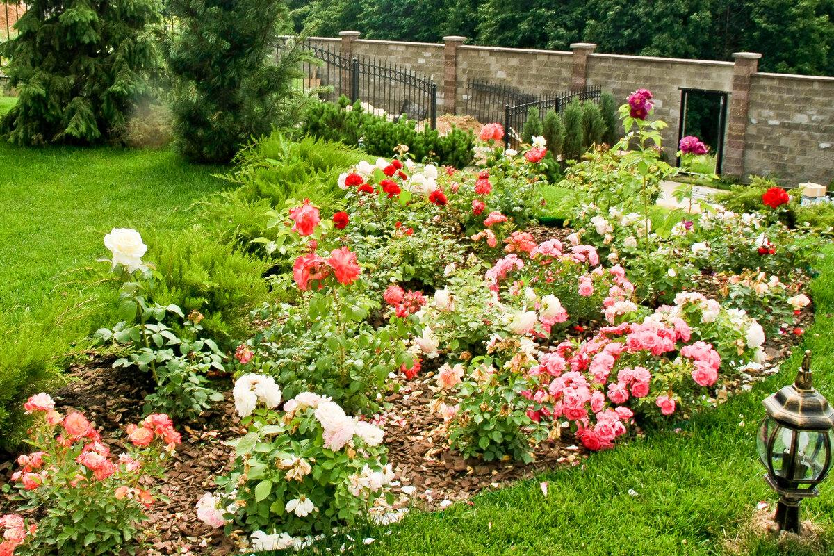 мнение, розы на садовом участке фото поэт, философ