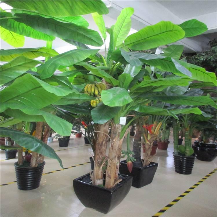 Банановая пальма, на каких деревьях растут бананы