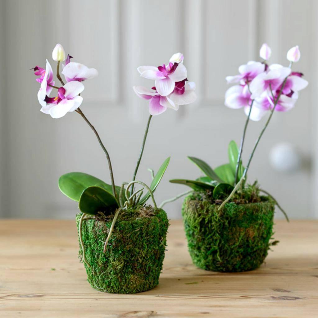 Орхидея уход в домашних условиях: варианты размножения и посадки цветка