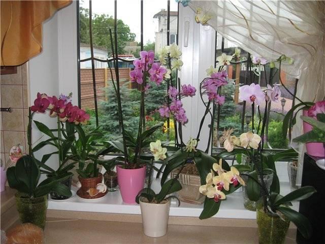 Можно ли держать дома орхидею: варианты почему хорошо или плохо