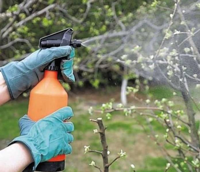 Обработка деревьев весной от вредителей и болезней. рецепты для 8 плодово — ягодных растений.