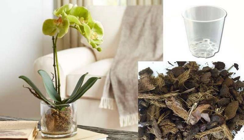 Как посадить детку орхидеи в домашних условиях: каким образом правильно отделить отросток, который образовался на цветоносе и переселить его в подходящий горшок?