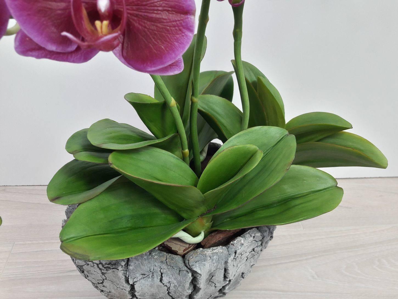 Почему у орхидеи в домашних условиях желтеют листья: причины и спасение растения