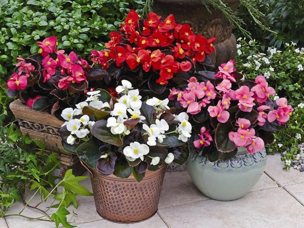 Семерка лучших цветущих комнатных растений, которые цветут круглый год