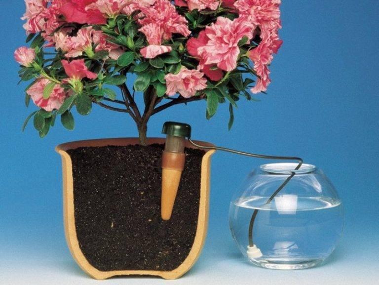 Выращивание цикламена в домашних условиях и уход за ним: при соблюдении каких правил нужно разводить цветок, а также как бороться с болезнями и вредителями?