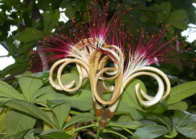 Экзотические цветы: фото с названиями и описаниями