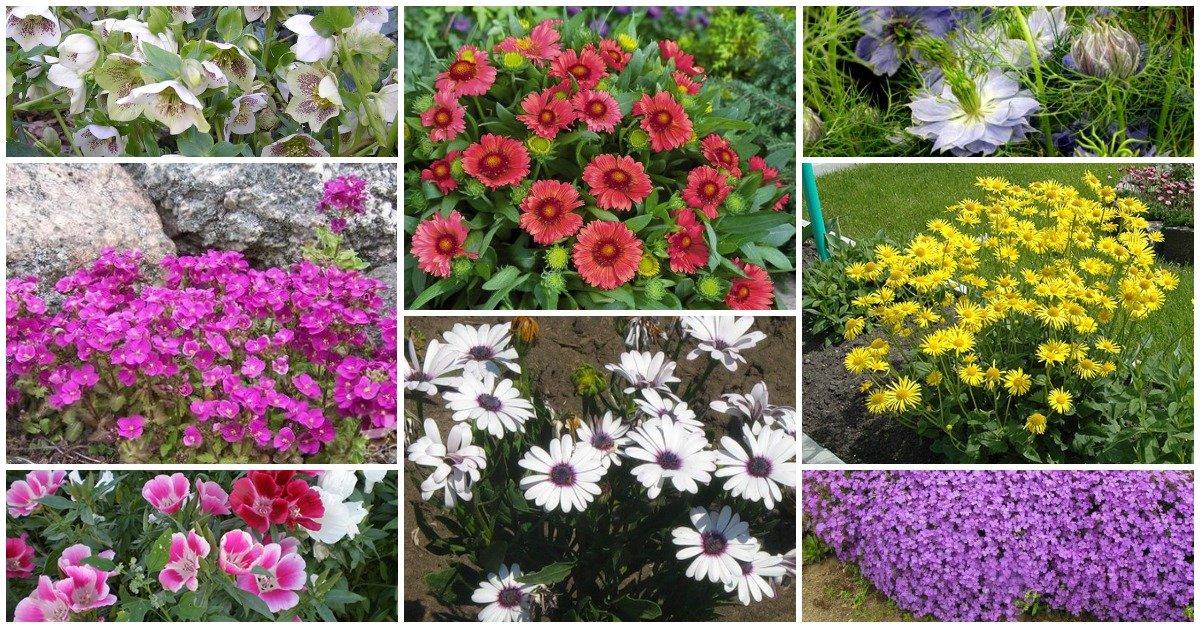 Ипомея батат: особенности, сорта и их выращивание