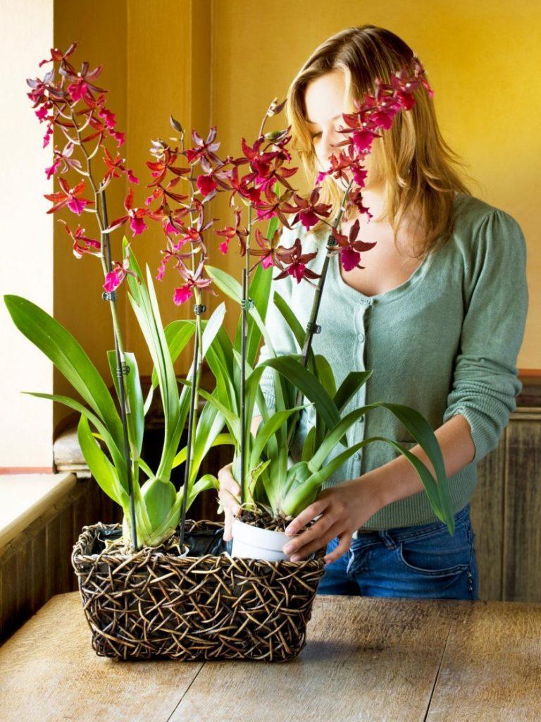 Орхидея фаленопсис отцветает, что делать дальше с южной красавицей?
