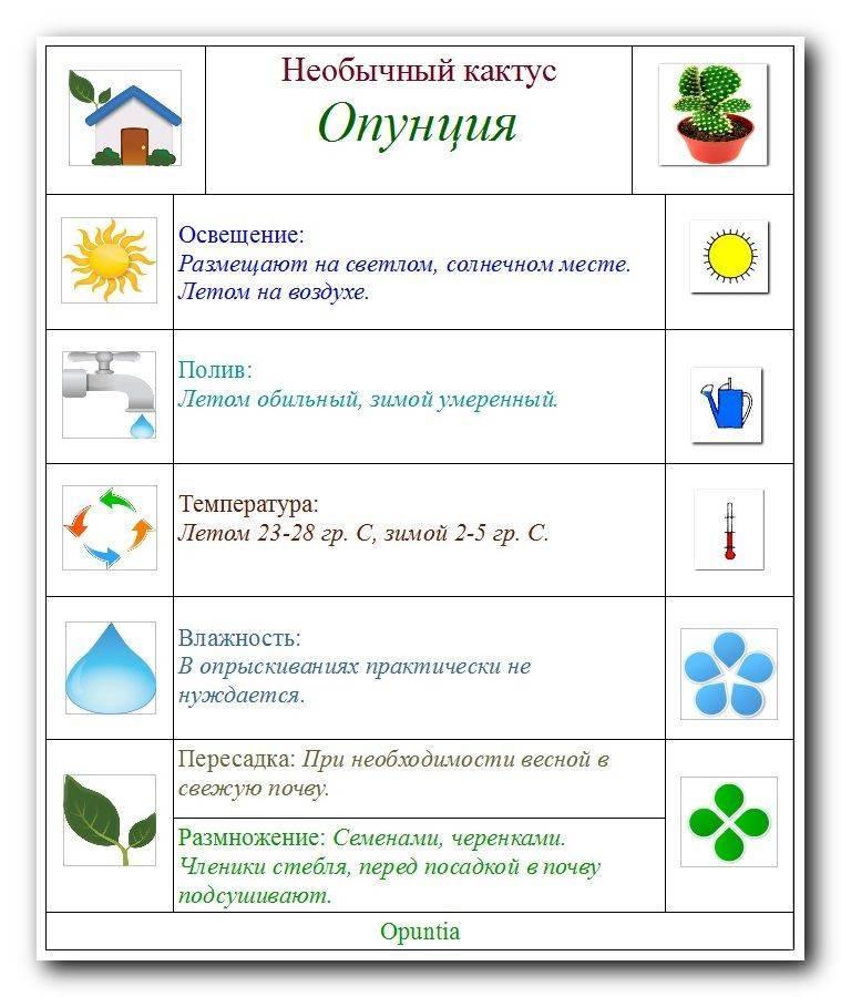 Как поливать кактусы: какой водой и как часто поливать кактусы