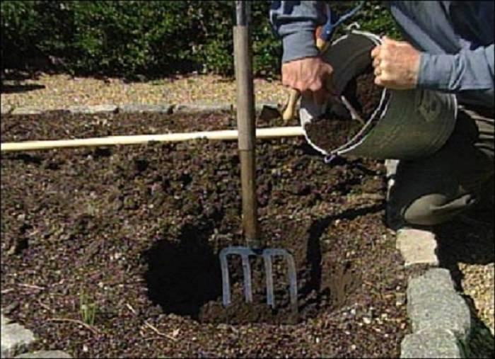 Какую почву любит клематис? осуществлять посадку в кислую или щелочную землю? состав грунта. допустимая кислотность