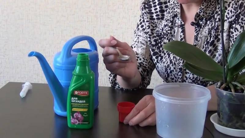 Лучшее решение для эффективной подкормки при минимальных затратах — чесночная вода для орхидей