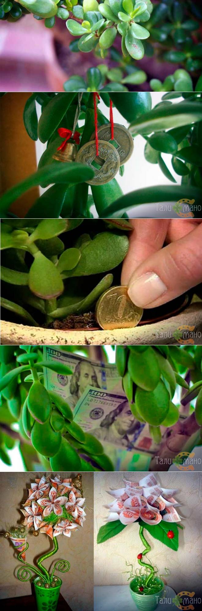 5 эффективных заговоров на денежное дерево