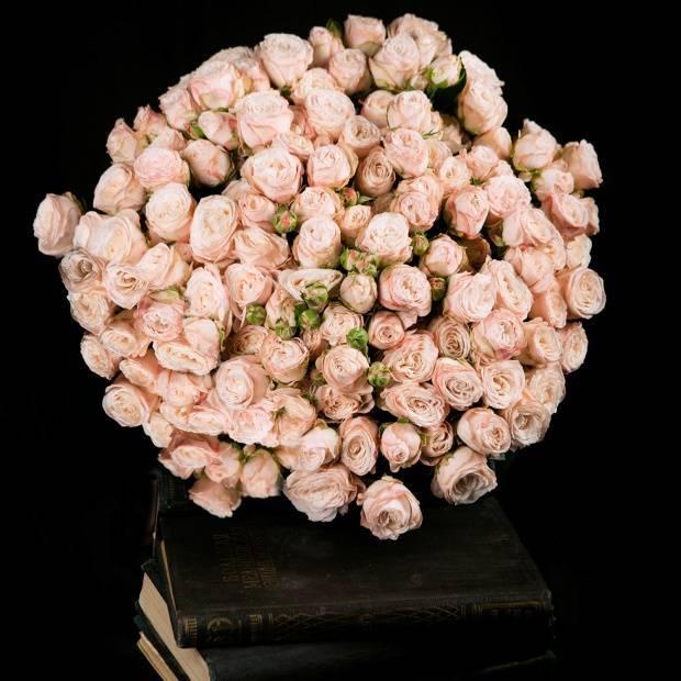 Роза бомбастик: фото + описание