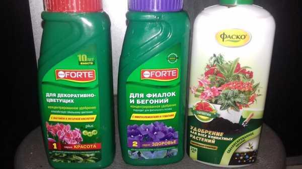 Чем подкормить пеларгонию для обильного цветения: какое требуется удобрение, когда и как применять йод, а также как осуществлять полив растения?