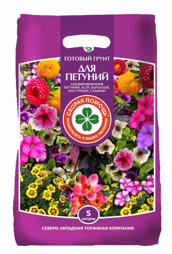 Чем подкормить рассаду петунии. чем подкормить петунию для обильного цветения