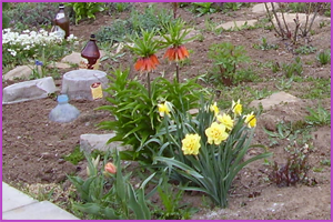 Рябчики: посадка и уход в открытом грунте, фото, хранение после цветения