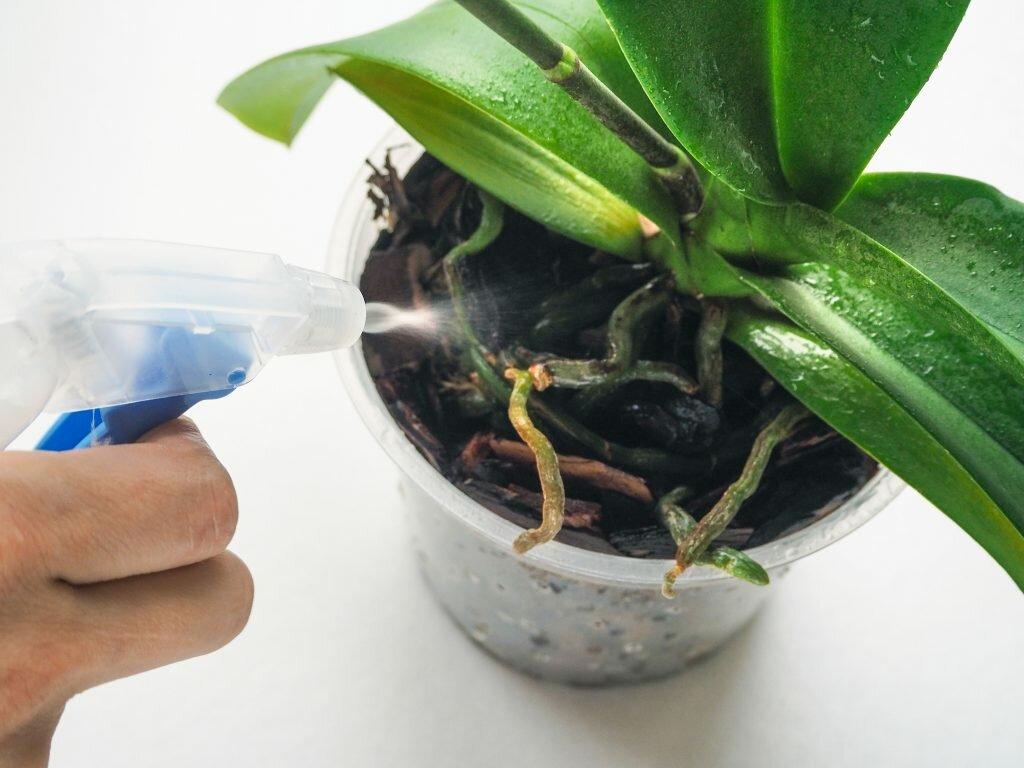 Как поливать орхидею: в горшке и домашних условиях