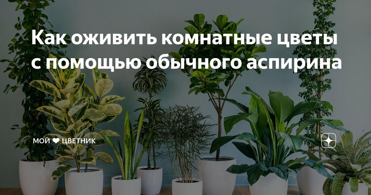 Какие цветы нельзя держать дома: фото и приметы?