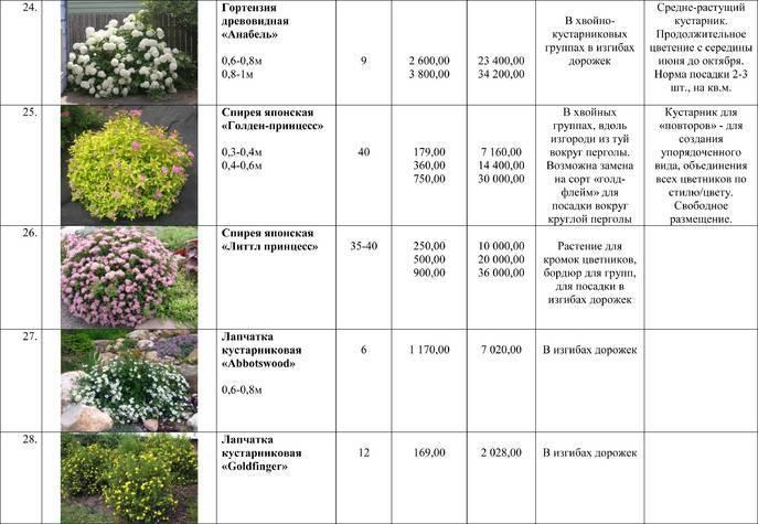 Условия ухода за бругмансией дома, основные виды и примеры выращивания