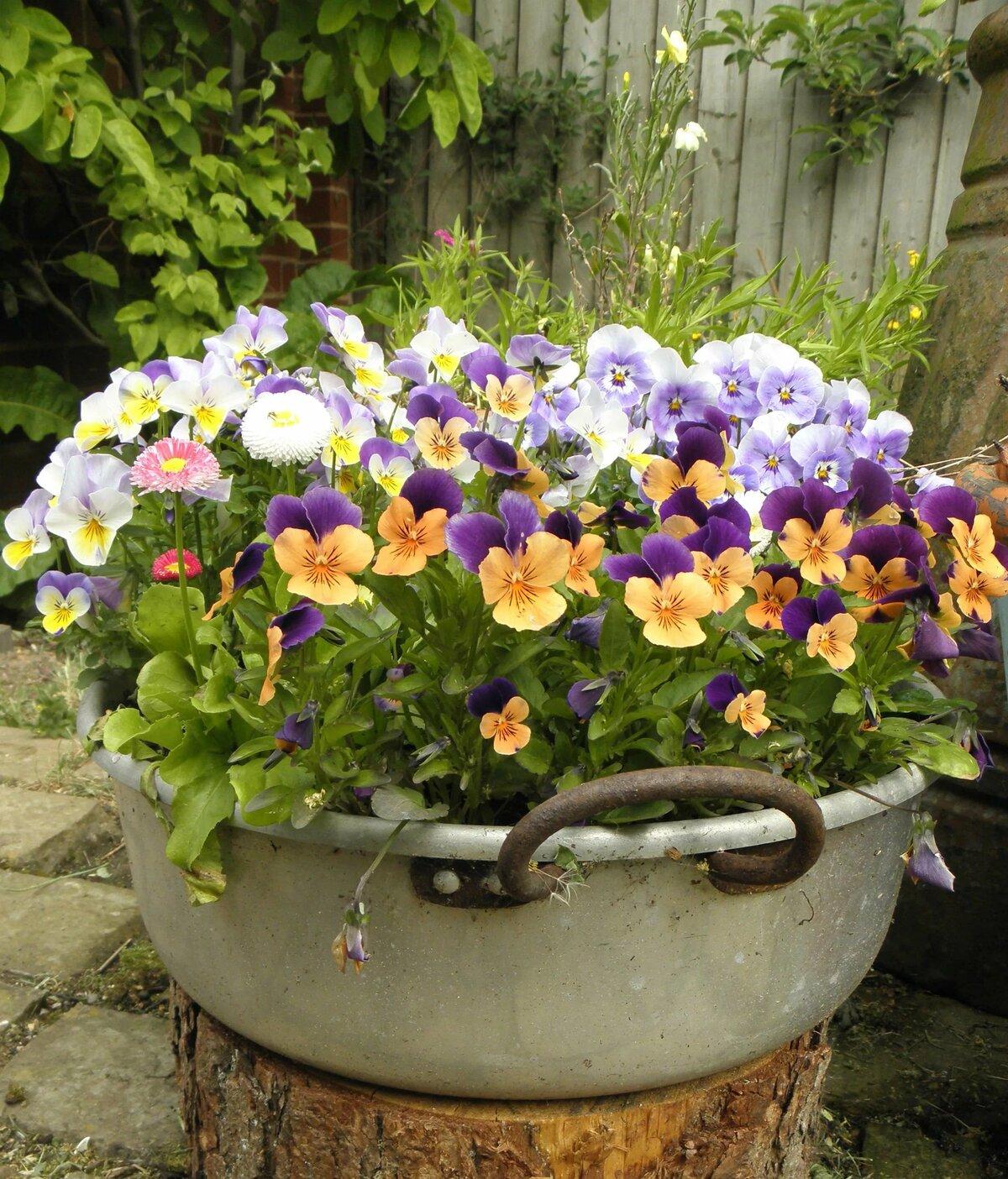 Уход за многолетними цветами на клумбах