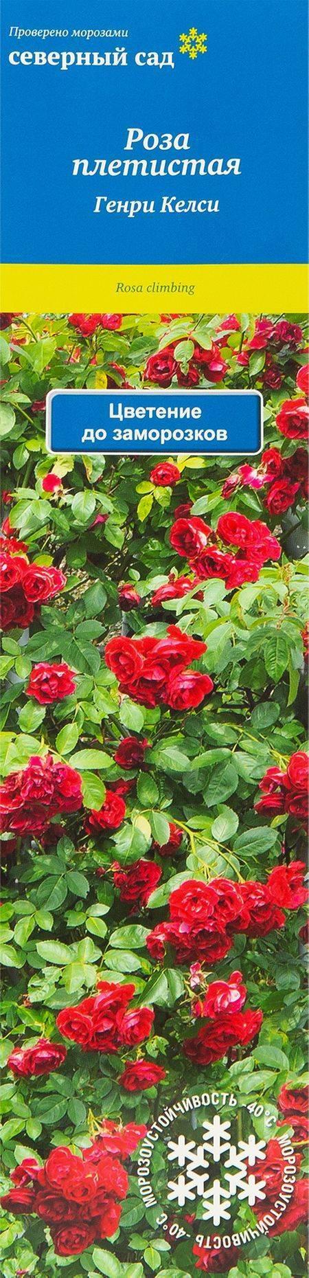Описание лучших сортов канадских роз, посадка и уход в открытом грунте