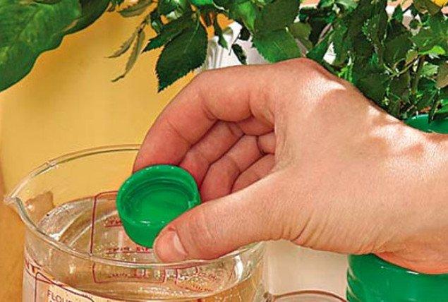 Подкормка комнатных цветов дрожжами: доступное и эффективное удобрение