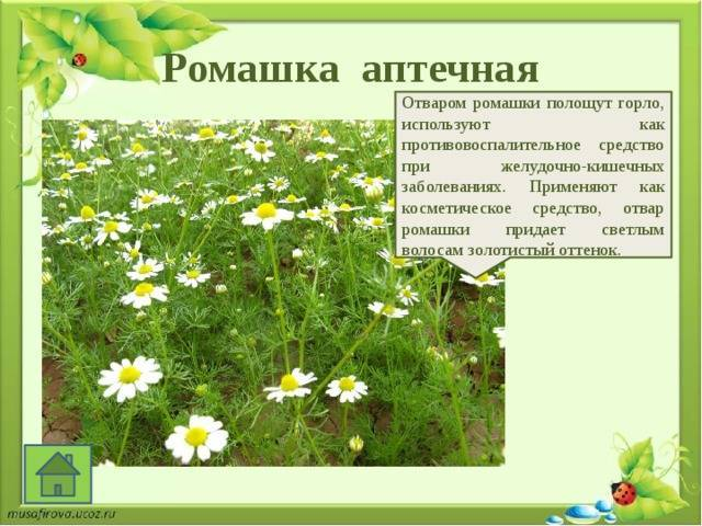 Растения семейства розоцветных: морфологическое описание видов и формула цветка
