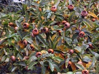 Абхазия: календарь фруктов и лакомств