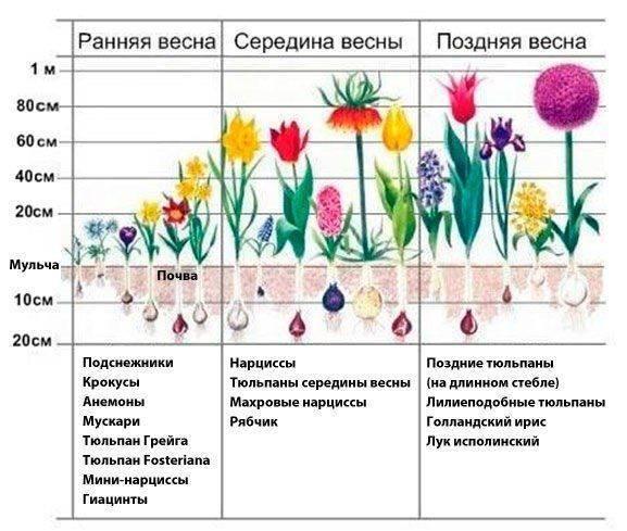 Как правильно подкормить лилии весной?